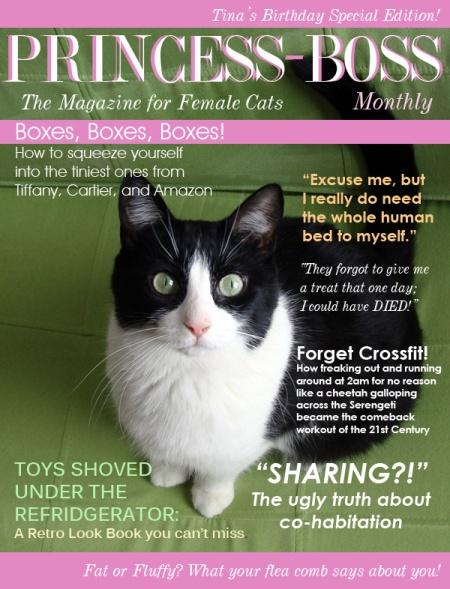 reading cat body language
