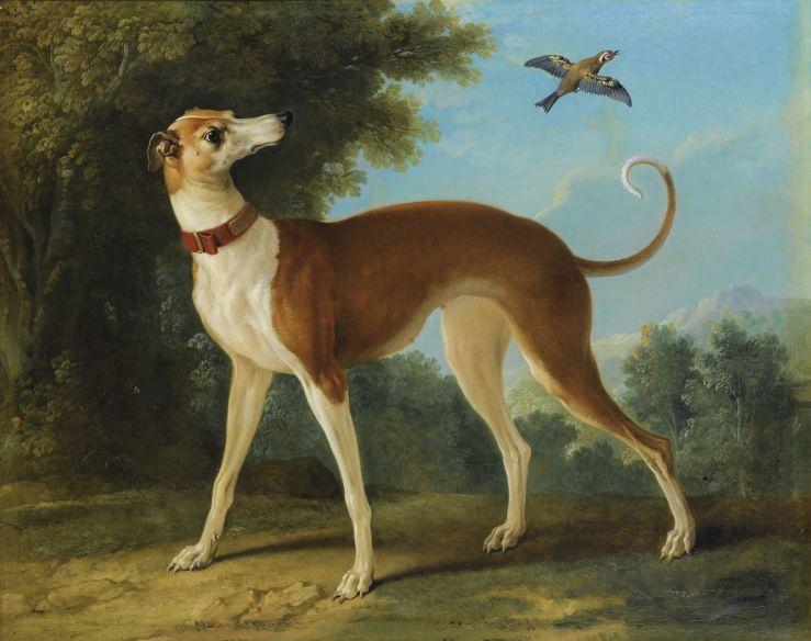 small tan dog